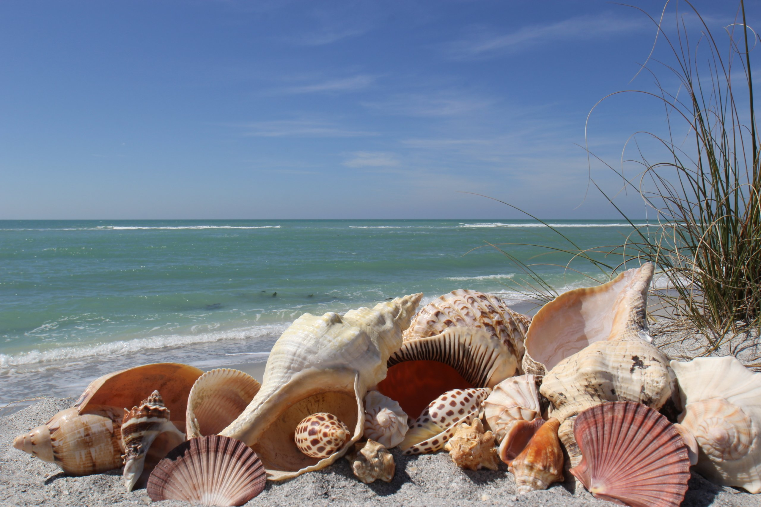 Sanibel Realtors - Shells on the beach